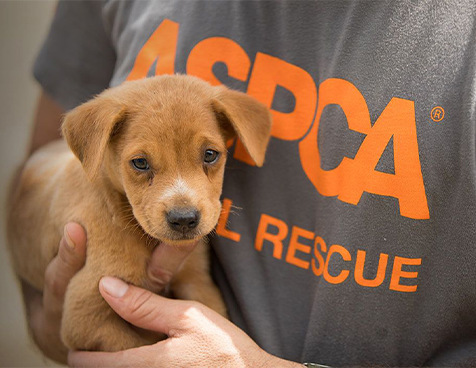 Aspca About